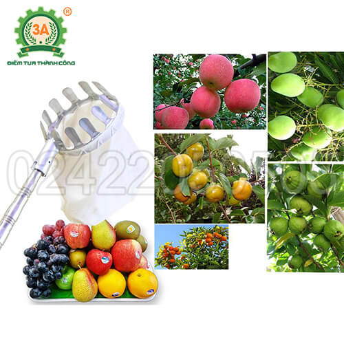 Dụng cụ hái trái cây inox 3A4M (01)