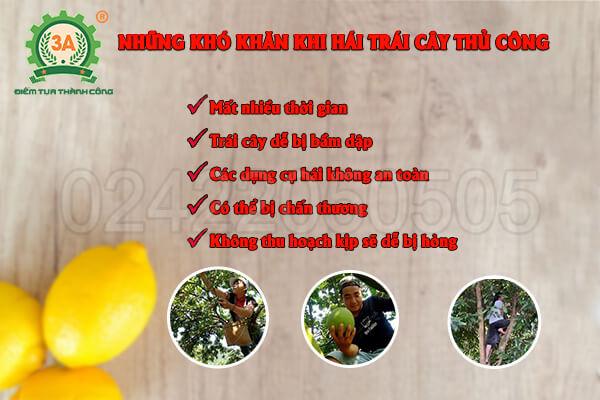 Những khó khăn khi không có dụng cụ hái trái cây trên cao