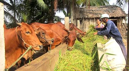 Kỹ thuật chăn nuôi bò cái tốt