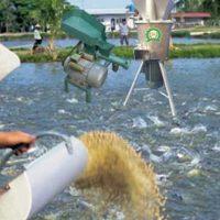 Cách chế biến thức ăn cho cá