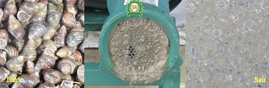 Ốc được nghiền nhuyễn bằng Máy nghiền ốc, xay cua 3A4Kw