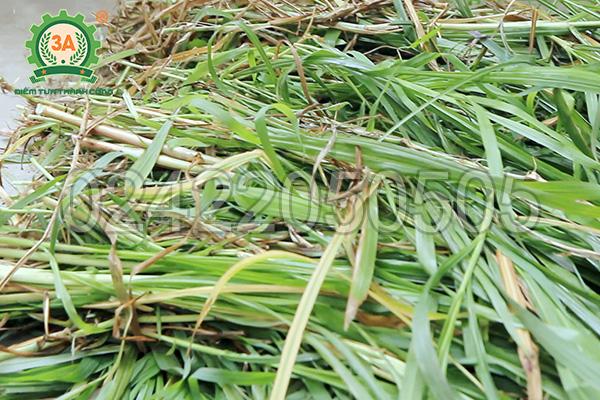 Nguyên liệu cỏ voi của máy băm thân cây ngô, cỏ voi 3A2,2Kw