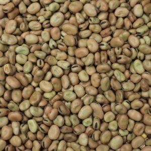 hạt đậu tằm
