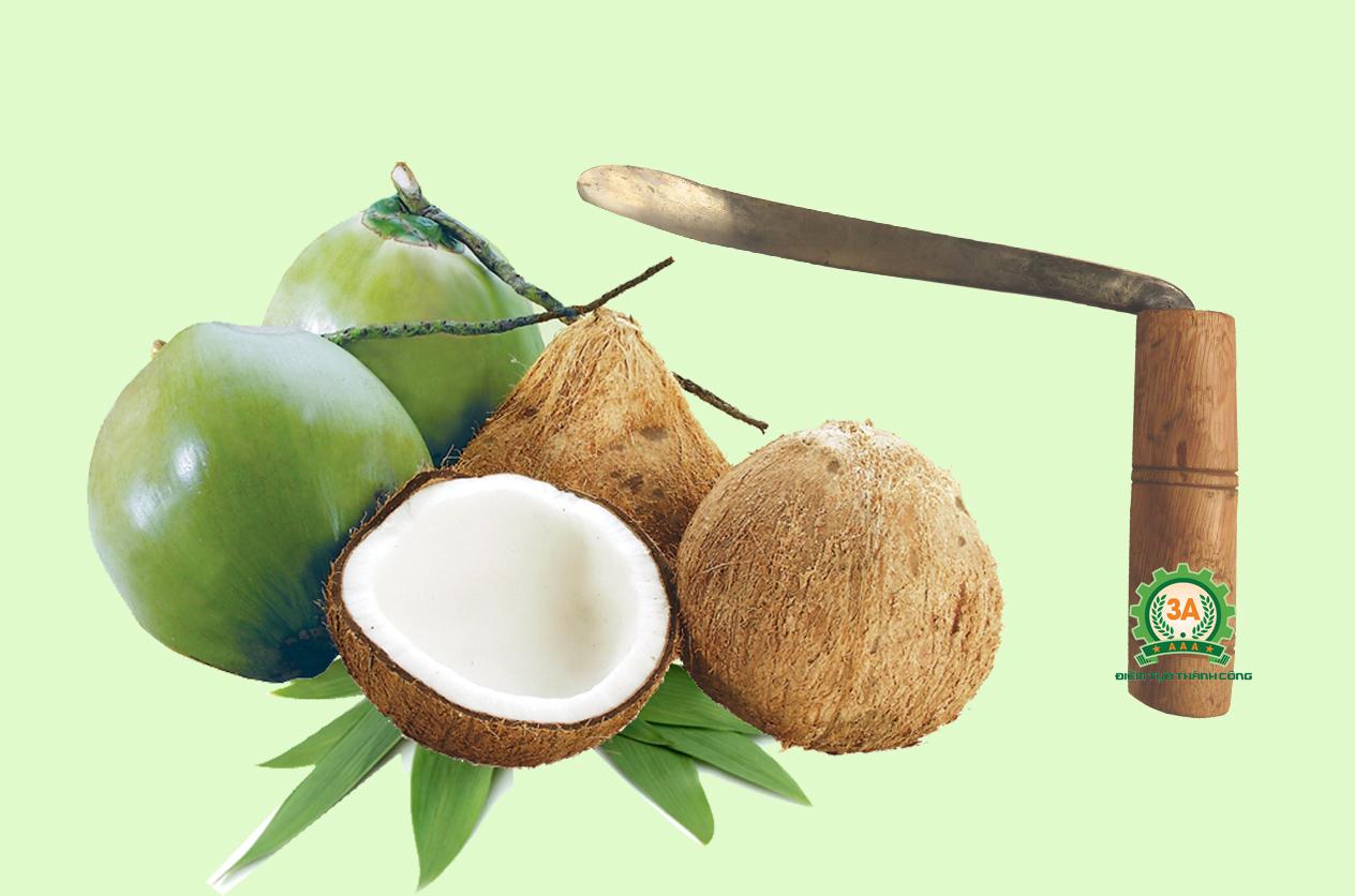 Tự làm dầu dừa với dụng cụ tách cùi dừa 3A