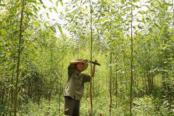 vay vốn trồng rừng và chăn nuôi