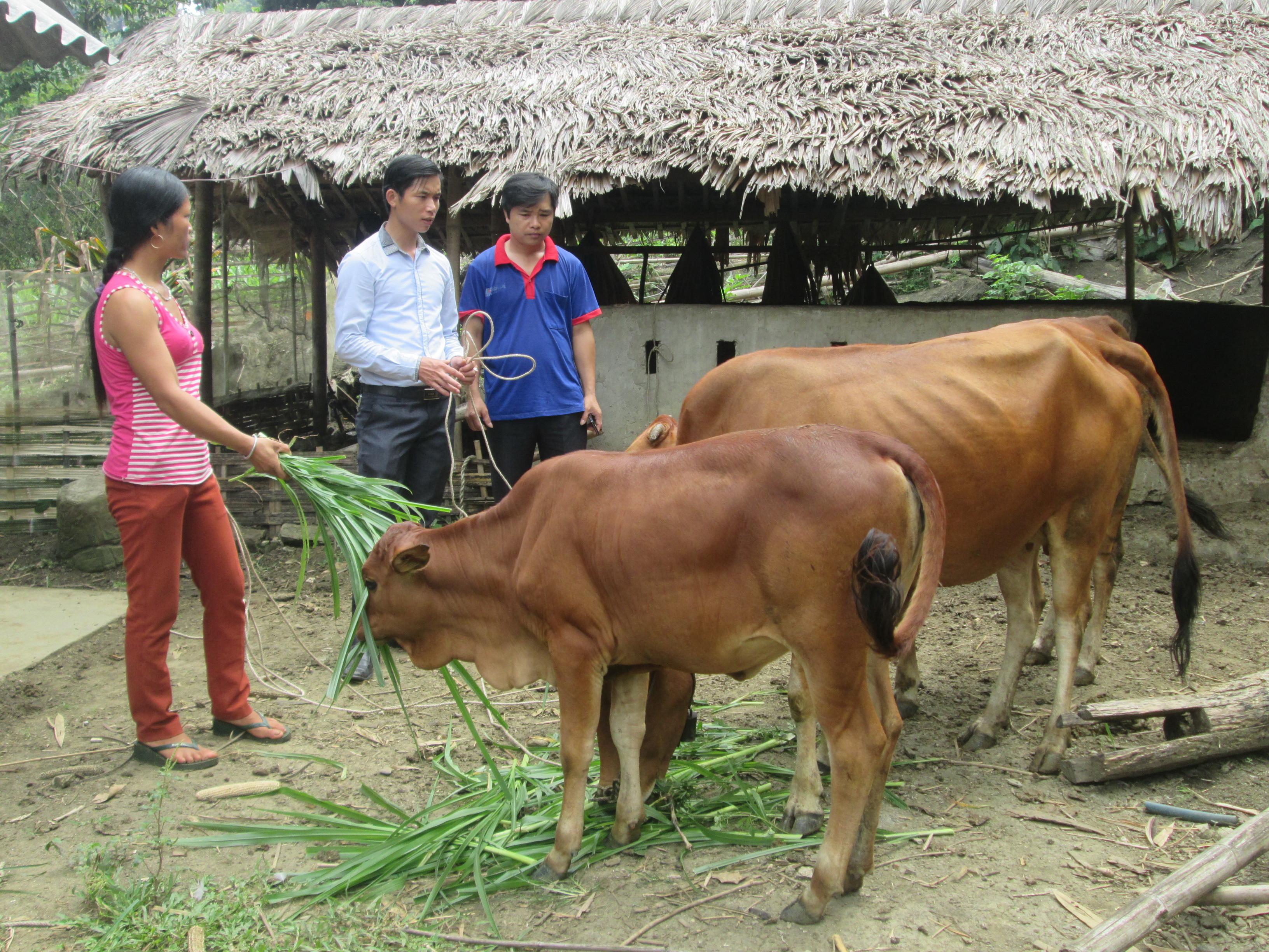 vay vốn trồng rừng và chăn nuôi lãi  suất thấp
