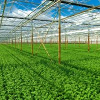 Nông nghiệp sạch