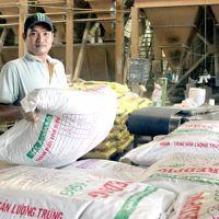 Giá thức ăn chăn nuôi