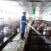 Cách chống nóng cho vật nuôi