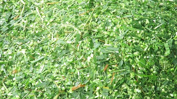 Cỏ được băm nhỏ bằng máy thái cỏ 3A9Z-2,5