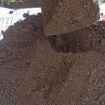 Ứng dụng của phân giun quế trong trồng trọt