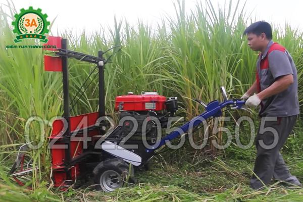 KTV sử dụng máy cắt cỏ cho bò 3A8HP