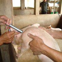 Nhiều nước trên thế giới đã ban hành lệnh cấm sử dụng kháng sinh trong chăn nuôi