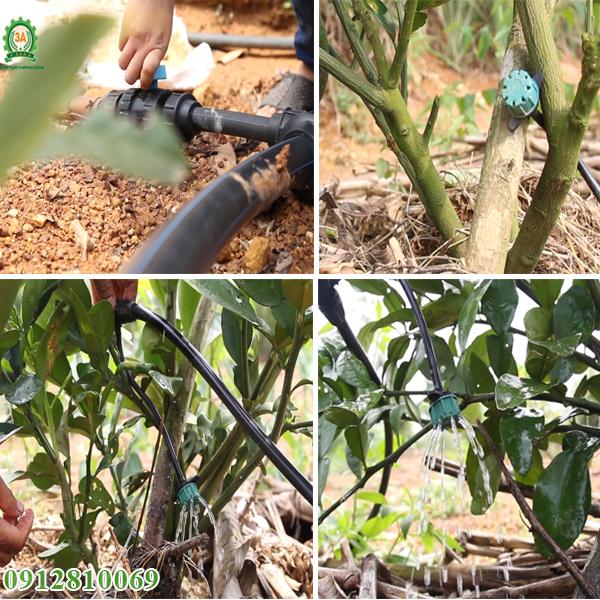 Hệ thống tưới nhỏ giọt 3A dùng tưới tiêu cho vườn cây ăn quả, vườn ươm...