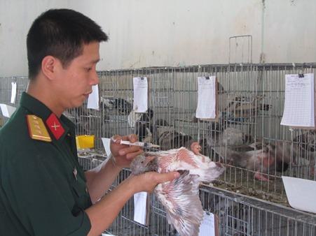 kỹ thuật nuôi chim bồ câu sinh sản - phòng trị bệnh cho chim bồ câu