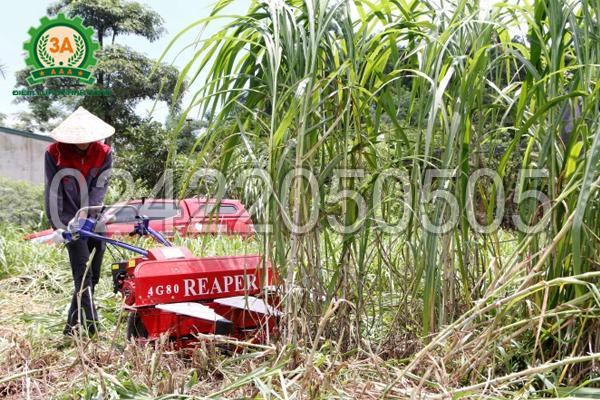Kỹ thuật viên sử dụng Máy cắt cỏ voi 3A5,5HP