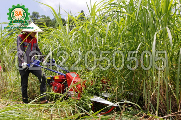 Máy cắt cỏ voi 3A5,5HP đem lại năng suất lớn