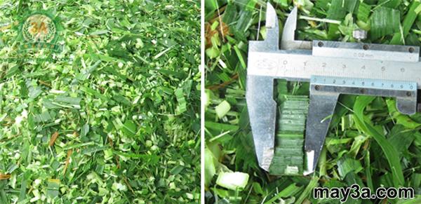 Cỏ băm nhỏ bằng Ngô được nghiền thành cám bằng Máy chế biến thức ăn chăn nuôi 3A2,2Kw (3pha/380V)