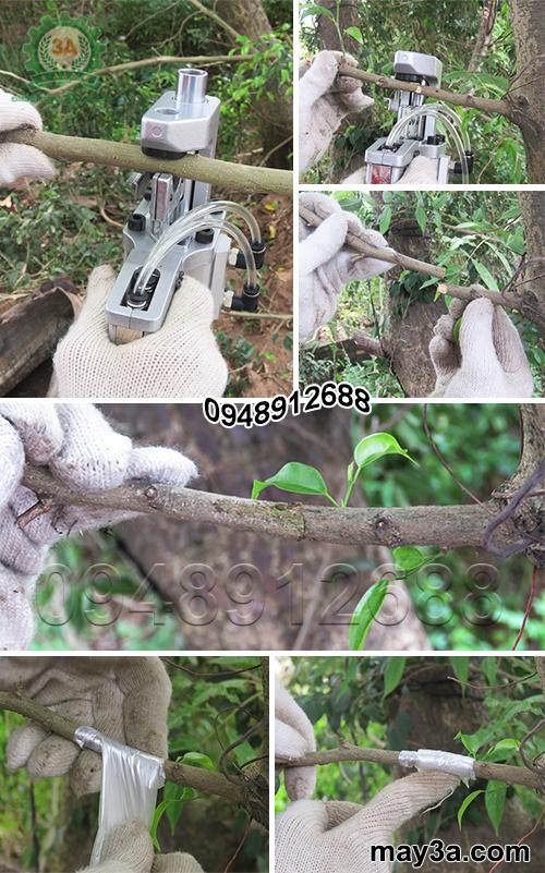 Kỹ thuật viên sử dụng dụng cụ ghép cành cầm tay 3A (loại sử dụng khí nén)