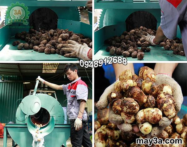 Khoai sọ được rửa sạch bằng Máy rửa củ, quả bằng xơ dừa 3A3Kw