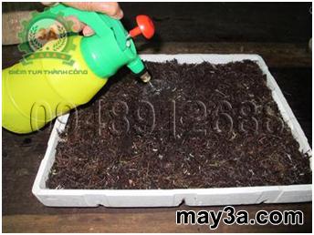 Kỹ thuật trồng rau mầm hiệu quả: Phun nước cho giá thể