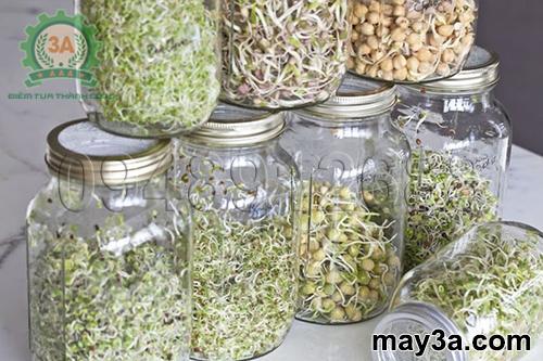 Kỹ thuật trồng rau mầm hiệu quả: Mật độ trồng các loại hạt rau