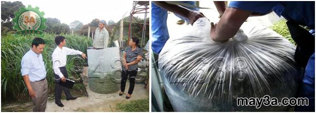 Ủ chua thân lá lạc dại làm thức ăn cho gia súc: Bà con đang tiến hành nén và buộc chặt túi tạo môi trường ủ
