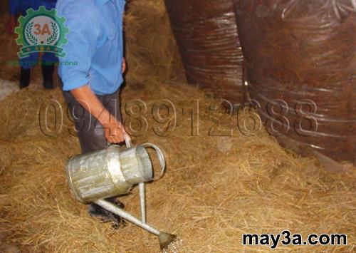 Cách ủ rơm cho bò bằng urê: Bà con đang tưới nước phân urê lên rơm rạ khô