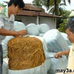 Cách ủ rơm cho bò bằng urê