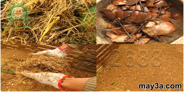Cách ủ rơm cho bò bằng urê: Sản phẩm đầu ra của Máy băm rơm, xơ dừa, cỏ voi kiểu ống tròn 3A