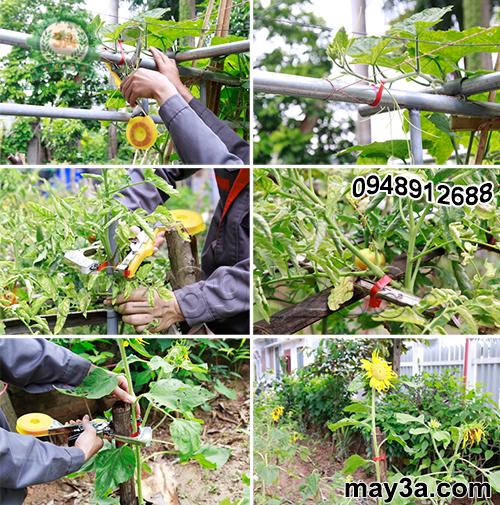 Các loại rau, hoa được buộc gọn gàng bằng Bộ dụng cụ buộc cành cây tự động 3A