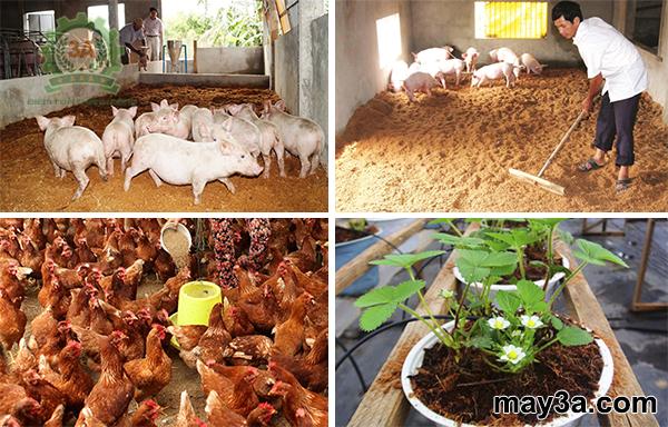 Máy băm nghiền xơ dừa, rơm, bã mía kiểu ống tròn 3A16Hp : Mùn xơ dừa được dùng làm đệm lót chuồng trại, giá thể trồng cây
