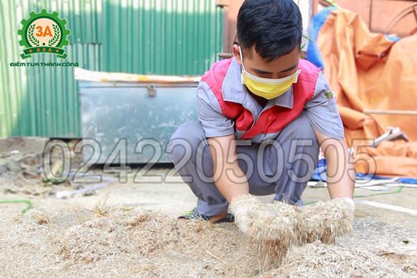 Dăm gỗ sau khi băm bằng máy băm ván bóc 3A15Kw