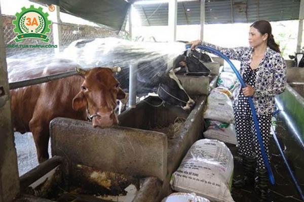 Kỹ thuật nuôi bò vỗ béo (03)