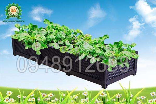 Khay trồng rau 3A