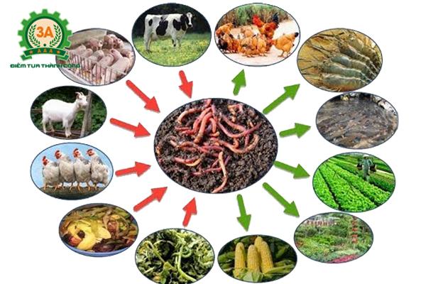 Kỹ thuật nuôi giun quế: Thức ăn của giun