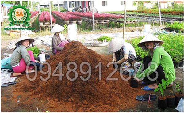 Cách làm phân hữu cơ từ xơ dừa: Xơ dừa luôn được tận dụng trong trồng trọt