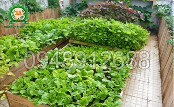 Vườn rau luôn xanh tốt do được bón bằng phân hữu cơ làm từ xơ dừa