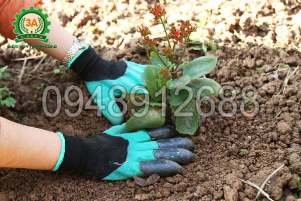 Găng tay làm vườn thông minh 3A - Trồng cây con, cây giống