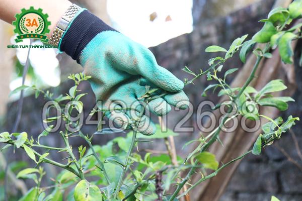 Găng tay làm vườn thông minh 3A giúp bảo vệ tay hiệu quả trước các cành cây có gai nhọn