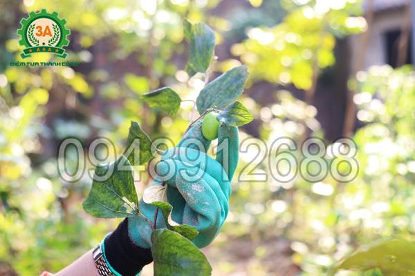 Găng tay làm vườn thông minh 3A linh hoạt khi hái quả