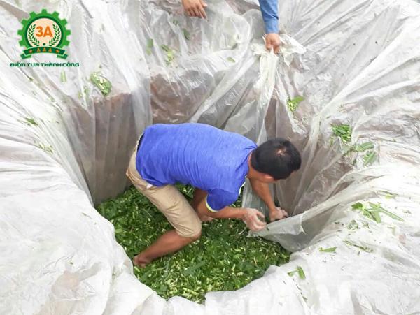 Túi ủ chua 3A sẽ thay thế hố ủ truyền thống