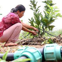 Công ty CPĐT Tuấn Tú đã tư vấn và hỗ trợ cô Ngát lắp đặt hệ thống tưới nhỏ giọt cho đồi cây