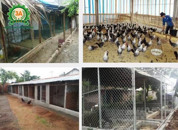 cách làm chuồng nuôi gà thả vườn: Một số kiểu chuồng gà đơn giản