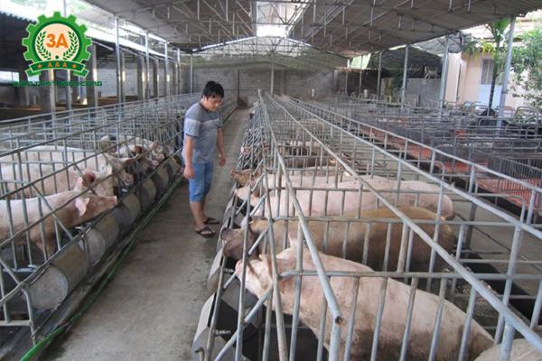 Giá thịt lợn hơi ngày 16/08/2018 (2)