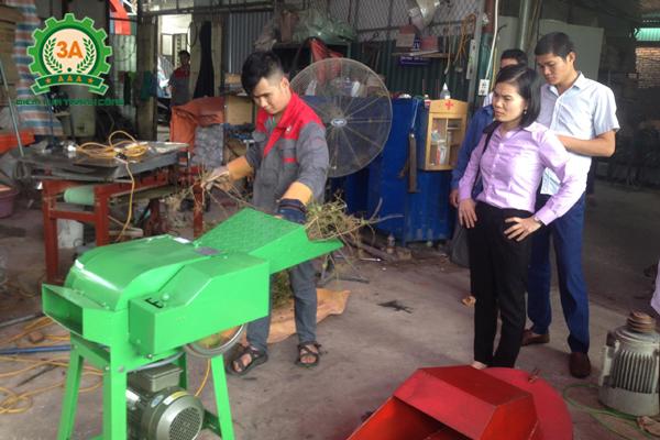 Kỹ thuật viên đang dùng máy băm cỏ 3A2,2Kw để băm cà gai leo