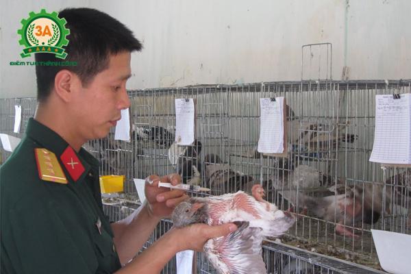 Các bệnh thường gặp ở bồ câu - Bệnh newcastle ở bồ câu