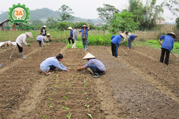 Máy khoan lỗ trồng cây con 3A sẽ thay thế lao động thủ công