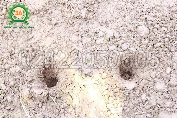 Lỗ khoan của máy khoan lỗ trồng cây con 3A