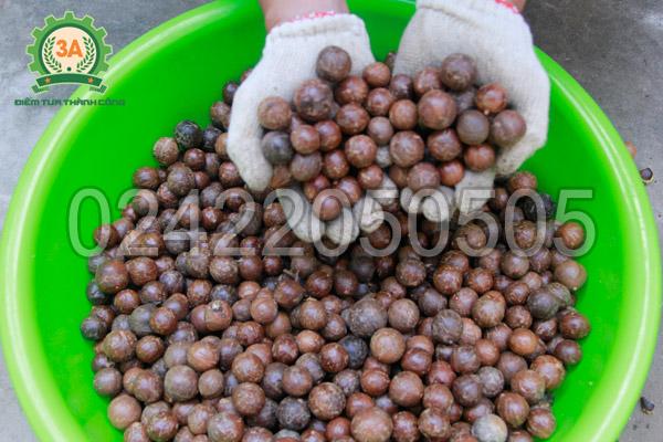 Máy tách vỏ xanh mắc ca 3A - Phần hạt sau khi tách